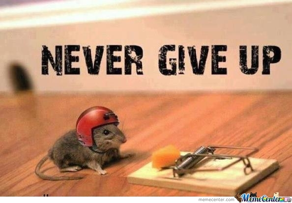 Never Give Up Mice! by yourfavouritemartain - Meme Center