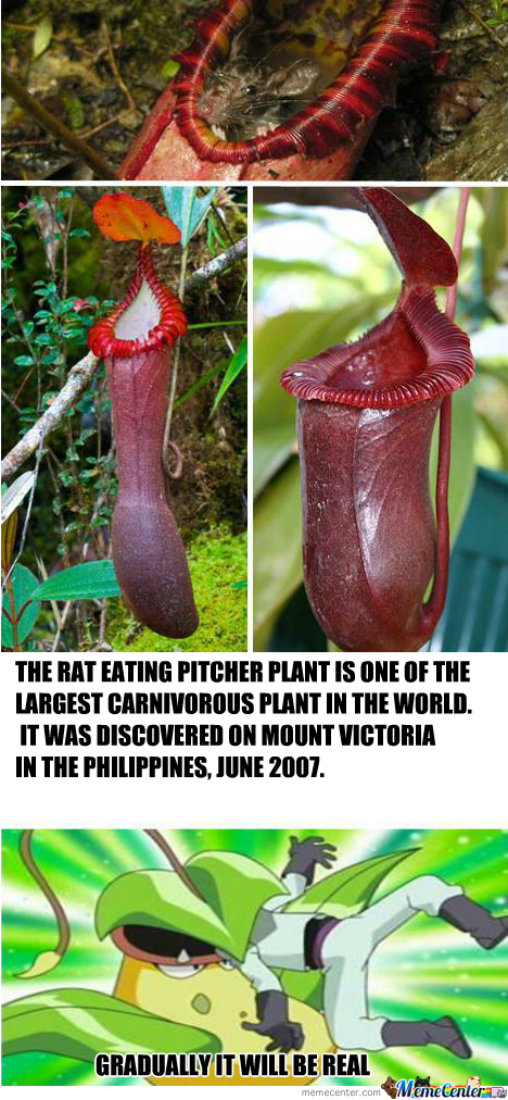 Never Go To Philippines In The Future