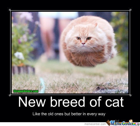 New Year's Resolutions 2016: Best Funny Memes | Heavy.com ...