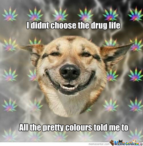 New Meaning Of Drug Dog