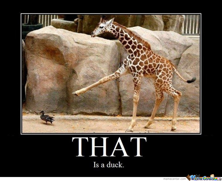 No One Told This Giraffe That It's Rude To Point