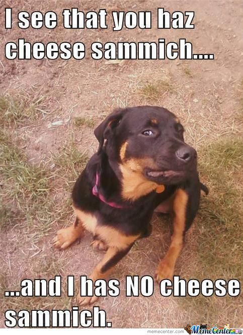 No Sammich, Bitch!