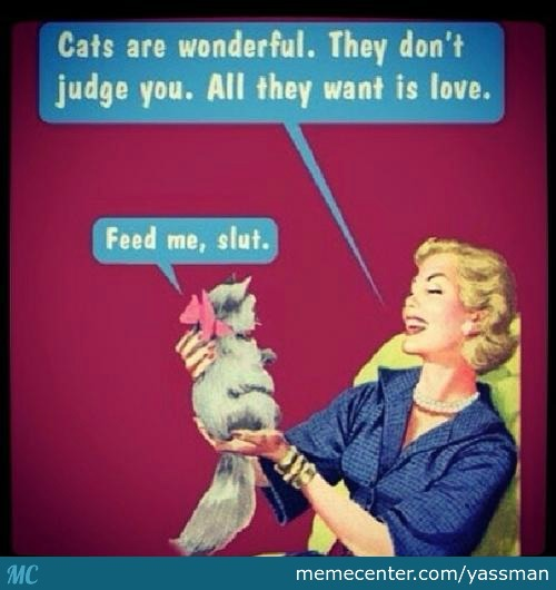 Nope Cat All What They Want Is Food By Yassman Meme Center