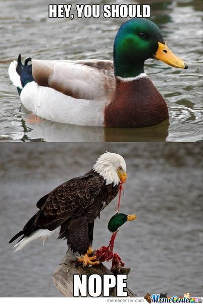 nope_o_1156712 advice mallard memes best collection of funny advice mallard pictures,Duck Meme