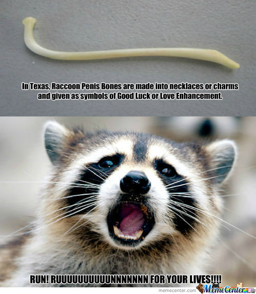 Not So Lucky For Raccoons