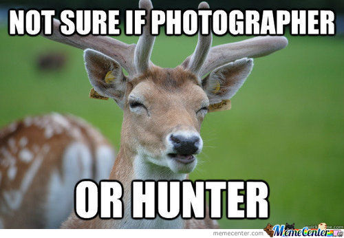 Not Sure Deer