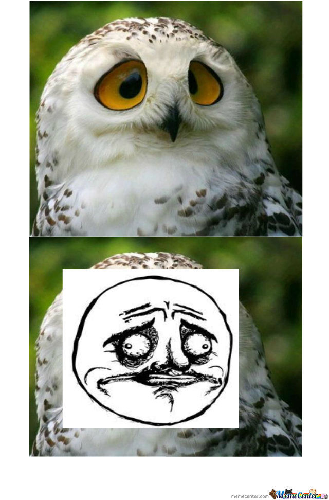 Not Sure Gusta Owl