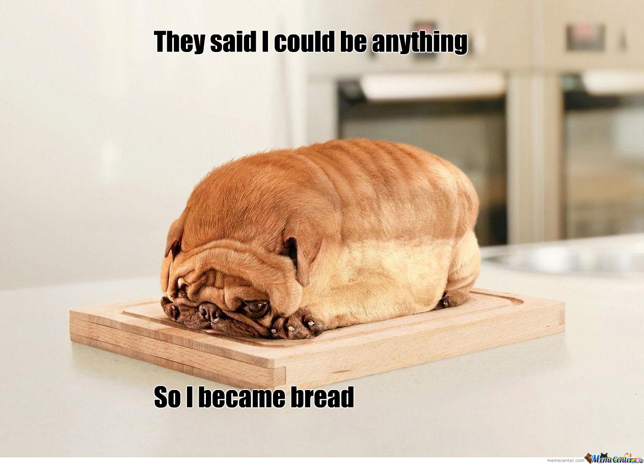 not-sure-if-bread-or-dog_o_2080021.jpg