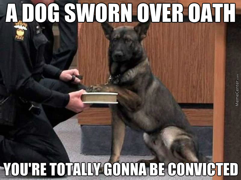 Growl Memes Best Collection Of Funny