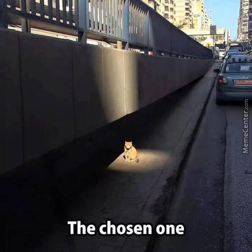 O Thy Blessed Cat