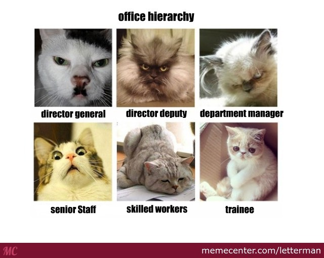 Office Hierarchy With Cats 3 By Recyclebin Meme Center
