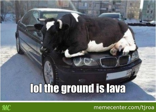 Oh Cow