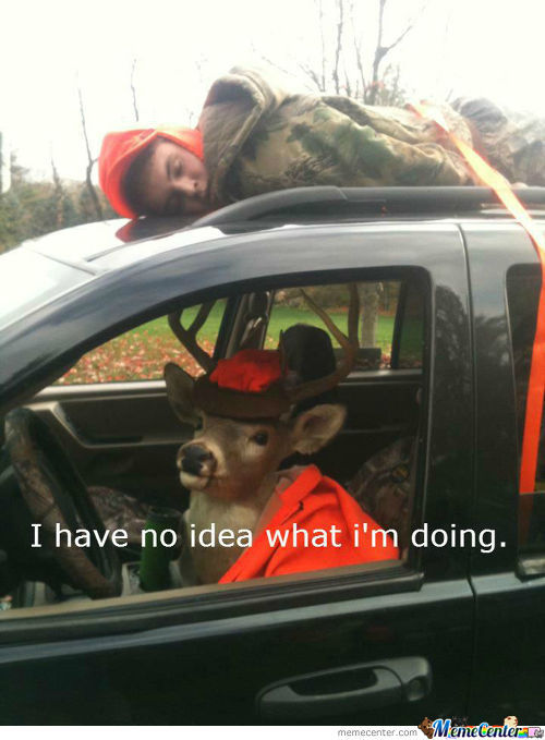 Oh Deer. This Is Not Safe.