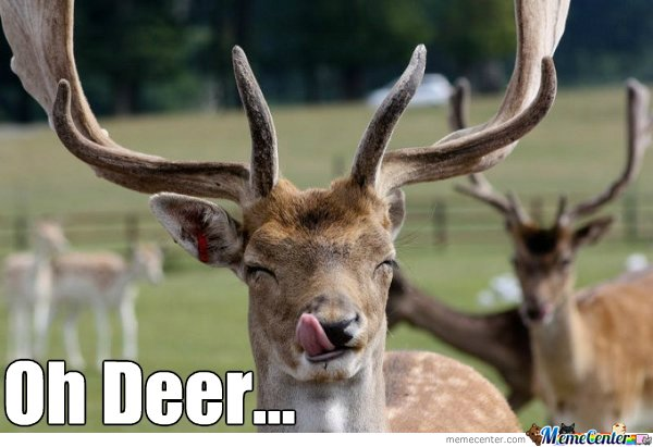 Funny Reindeer Meme : Oh deer by suitonx meme center
