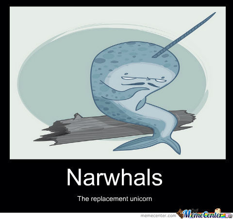 Oh Narwhals