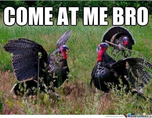 Oh, Silly Turkeys. We Shall Come For You Soon Enough