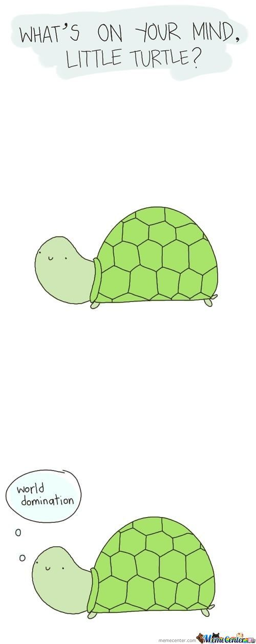 Oh Turtle