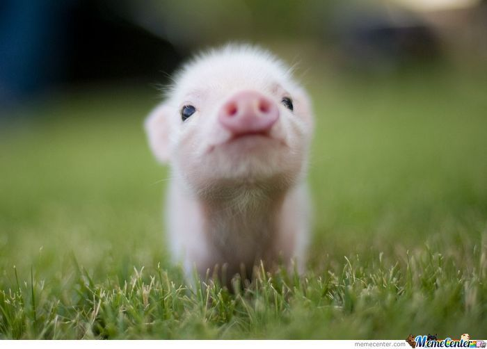 Oh You Hate Pigs...ok :(