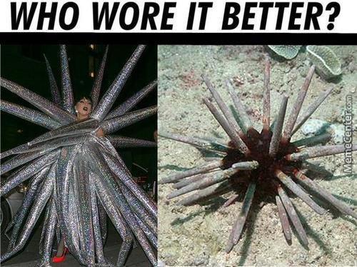 One Is Toxic If Touched ..the Other Is A Sea Urchin