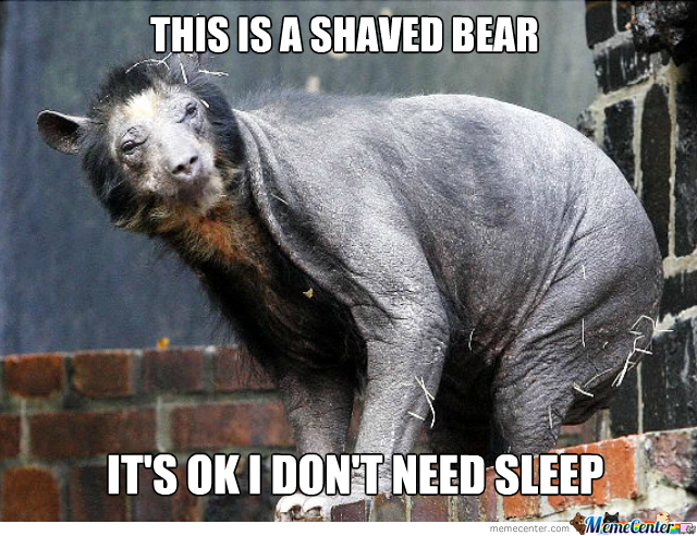 Can T Sleep Funny Meme : Only animal that doesn t look funny when shaved by recyclebin