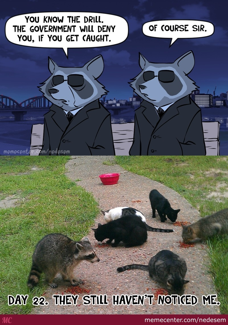 operation raccoon city_o_2640725 raccoon memes best collection of funny raccoon pictures