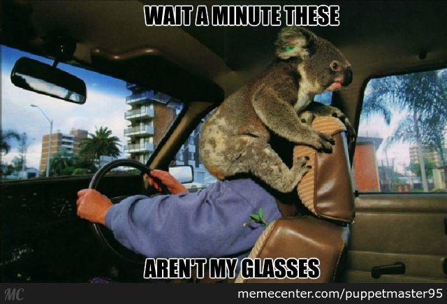 Or Are Koala Glasses Now Totally In