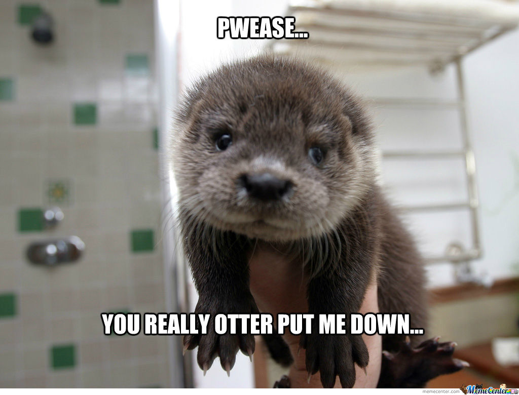Otter By Fluttershy Meme Center