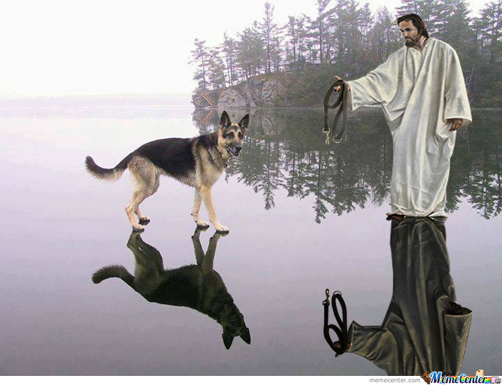 Our Shepherd Wants To Take His Shepherd For Shit And A Stroll