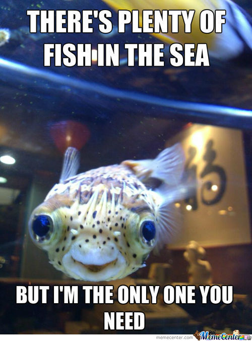 Overly Attached Fish