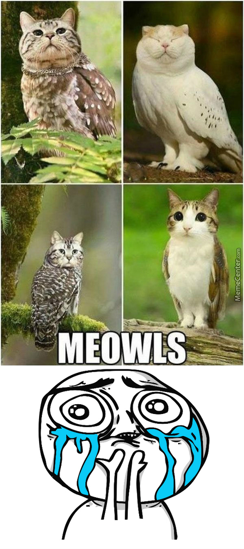 Overly Cute Combination Between Animals