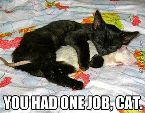 Overly Kind Cat!