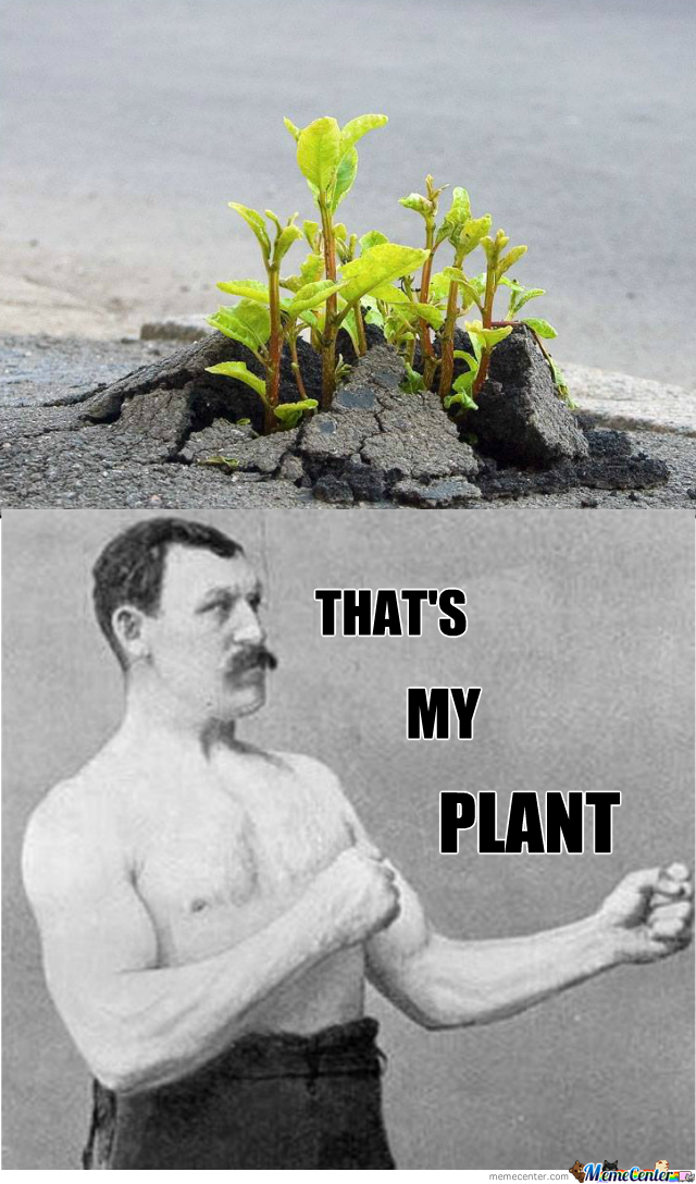 Overly Planty Plant