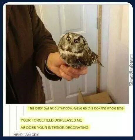 Owl No You Didn't