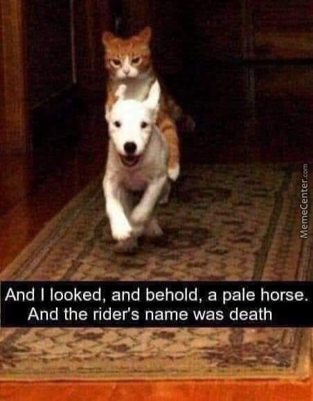 Pale Ride Ginger Rider
