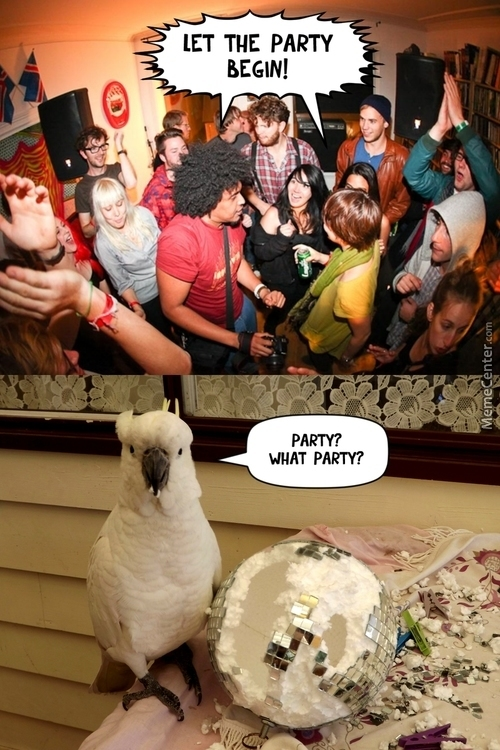Parrot Ate The Whole Party