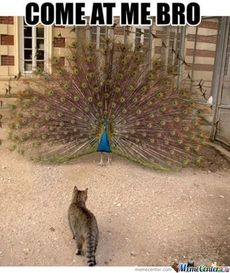 Peacock Swag