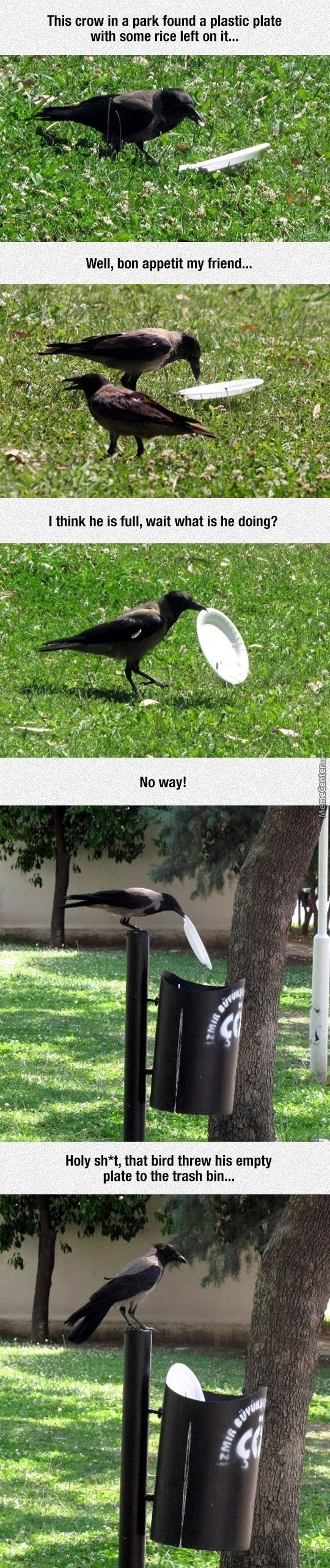 People Should Learn Some Stuff From Birds