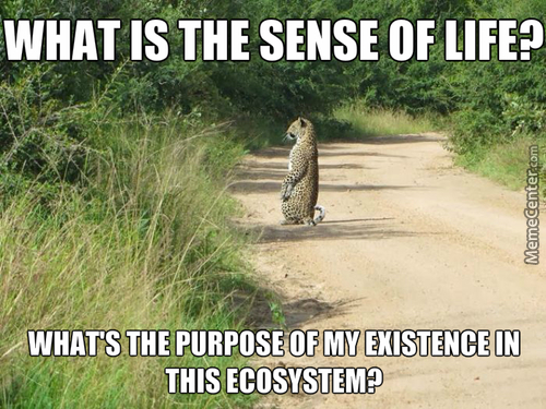 Philosopher Leopard Is Philosophizing.