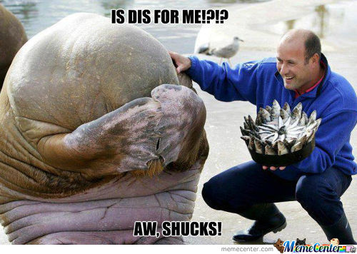 Photo Of When A Walrus Received A Fish Cake For His Birthday!