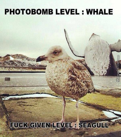Photobomb Level: Nature