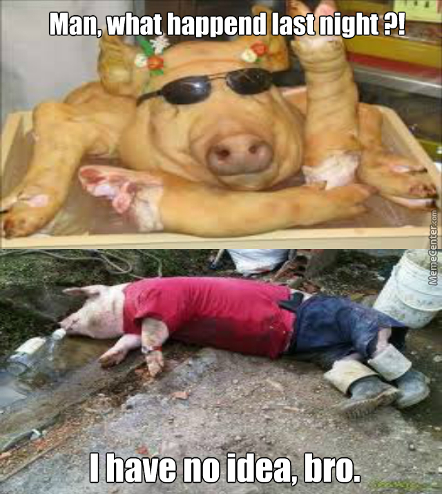 Pigs Deserve Fun Too !!