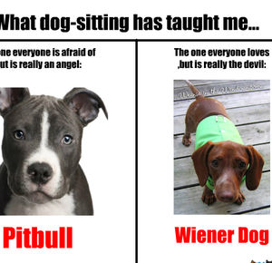 pitbulls and wiener dogs_fb_268020 pitbulls and wiener dogs by nyandeerxd meme center