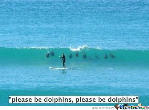 Plzzz Be Dolphins