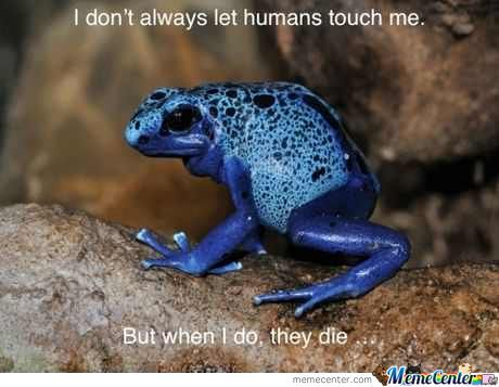 Poisonous Frog