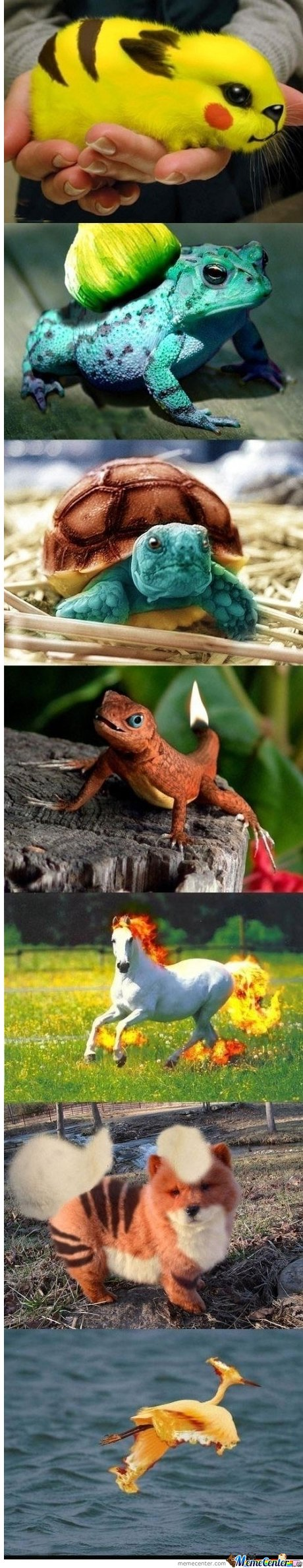 pokemon in real life! got to catch theme ALL