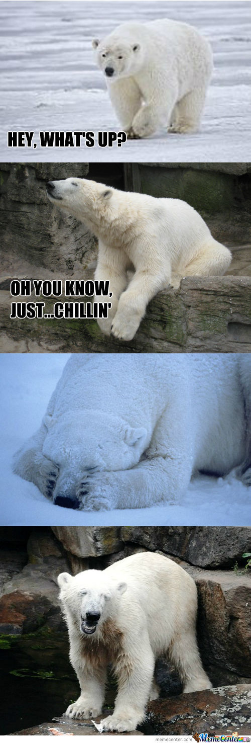 Polar Bear Puns (He Can Hardly Bear It!)