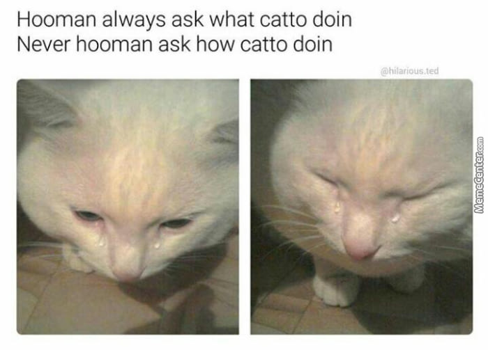 Poor Catto