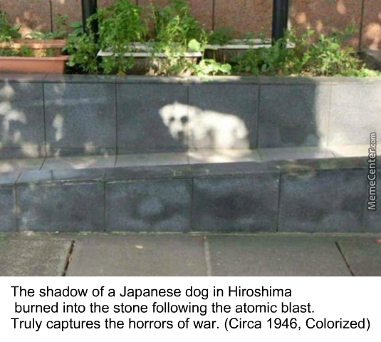 Poor Doggos Affected By The Atomic Bomb :c