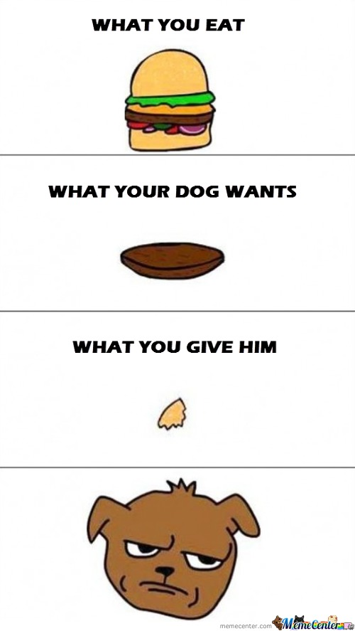 Poor Dogs
