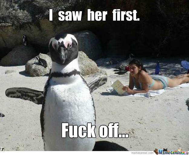 Possessive Penguin